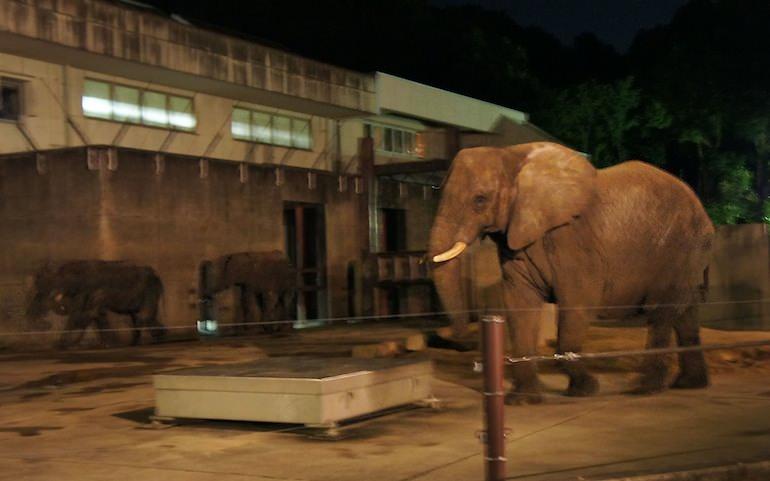 1013動物園4