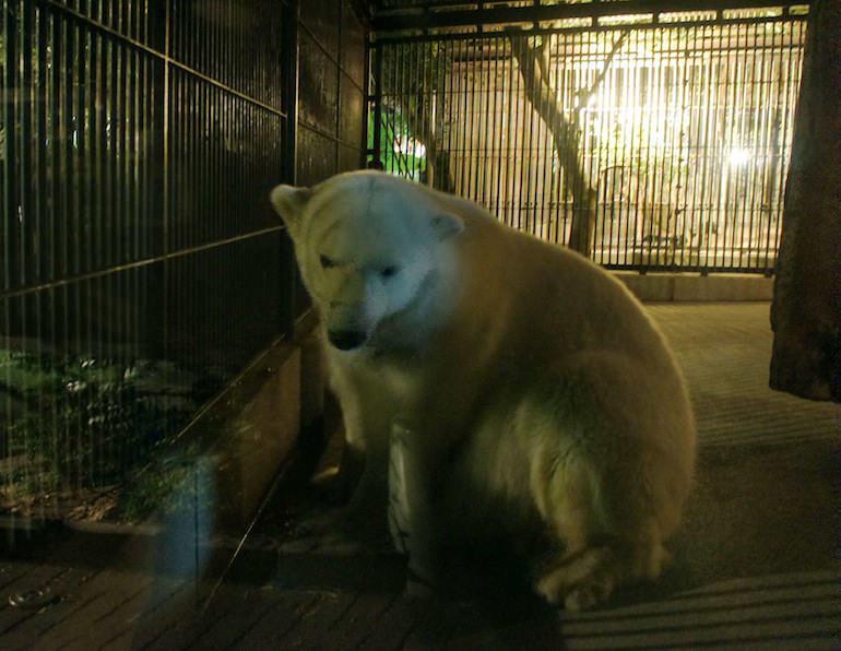 1013動物園3
