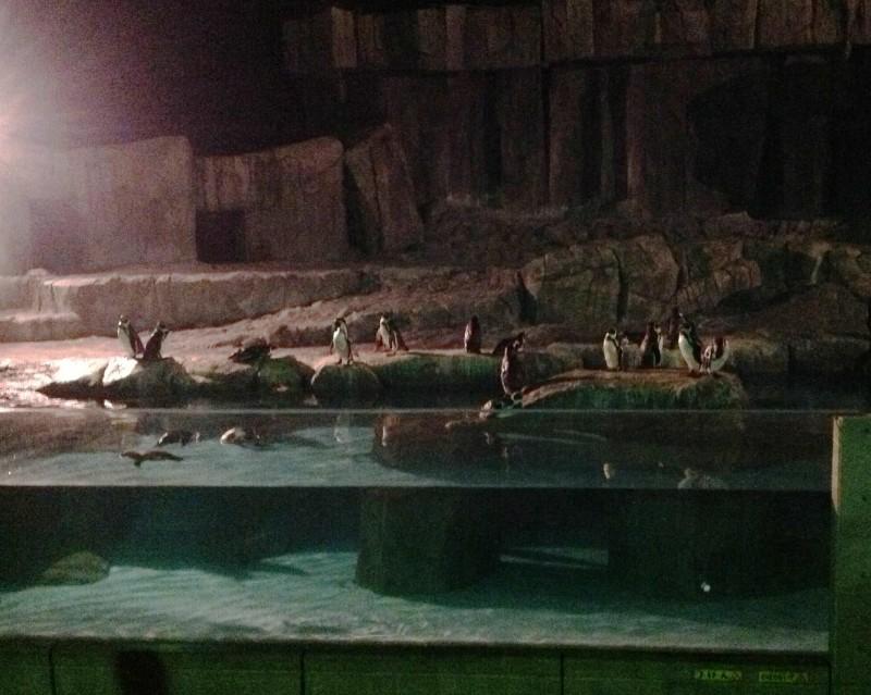 1013動物園6