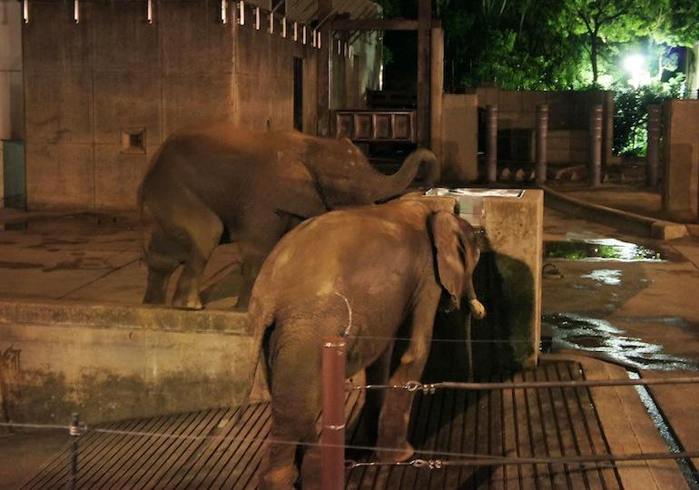 1013動物園5