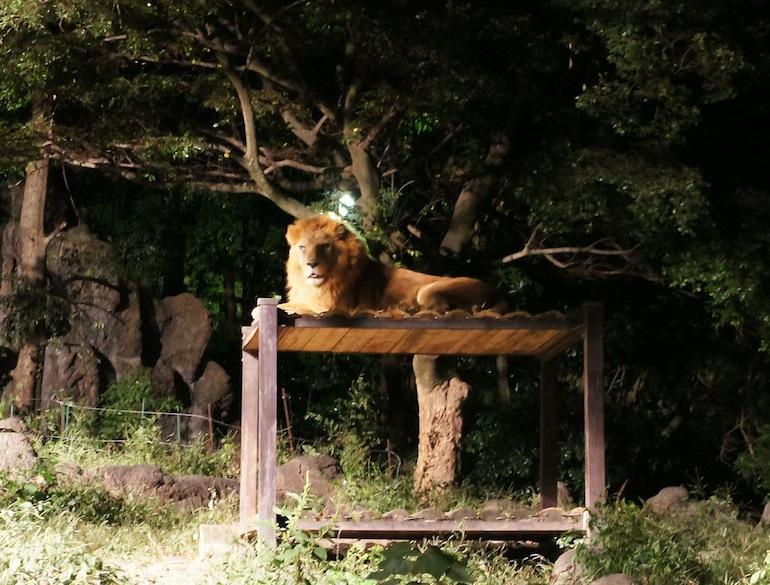 1013動物園13